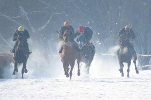 Шабац: Новогодишње коњичке трке