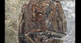 Кина: Откривен фосил диносауруса налик змају 2