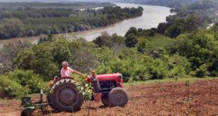 Пред сетву кукуруза држава укинула субвенцију на гориво, скупље семе, ђубриво, нафта…