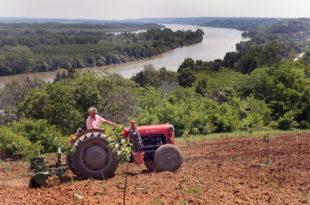 Пред сетву кукуруза држава укинула субвенцију на гориво, скупље семе, ђубриво, нафта...