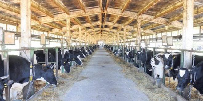 Влада Србије је и званично уништила сточарску производњу у Србији