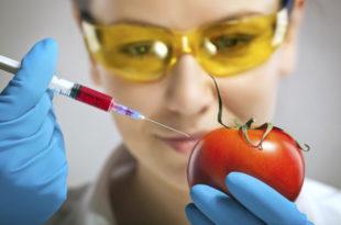 ТРОВАЧИ! Вучићев режим дозволио увоз и продају ГМО хране у Србији, нацрт закона чувају у тајности!