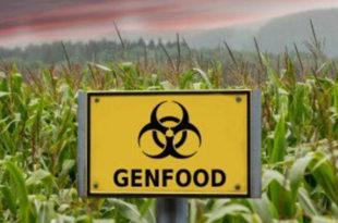 Једемо ГМО а да и не знамо, погледајте у којим градовима и намирницама је пронађен