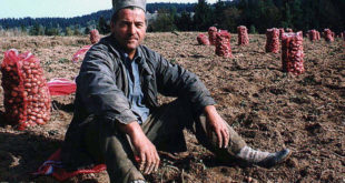 Србија и даље све више из године у годину увози кромпир, лук, пасуљ…
