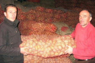 Док Србија масовно увози кромпир из ЕУ наши произвођачи бацају на хиљаде тона кромпира у потоке и јаруге јер нема купаца