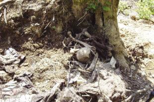 Шиптари су тела киднапованих и несталих Срба раскомадали да их никада не би нашли