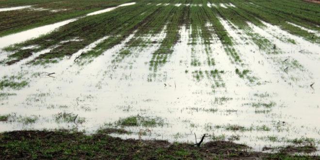 Сељаци туже Србијаводе: Због лоших насипа поплављене њиве 1