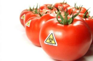 ЕУ хоће каки, неће каки: Ипак спрема план за забрану ГМО