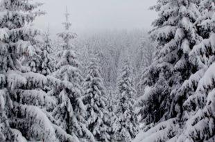 Мећава на Црном Врху, снег на Копаонику и у Димитровграду