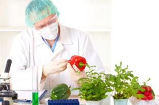 ГМО у Српску стиже преко Федерације