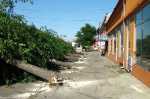 Сеча дрвореда у Србобрану! (фото)