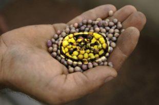 Убијање Србије канцерогеном храном: Ово што једемо, појешће нас