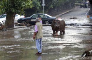 Потоп у Тбилисију, лавови, тигрови, медведи и вукови побегли из зоо врта (видео)
