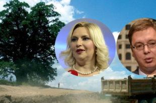 ШЕСТ ВЕКОВА НЕСТАЛО У ТРЕНУ Вучићеви секташи су протекле ноћи посекли запис у селу Савинац 9