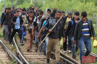 80% миграната који траже азил у ЕУ нису из Сирије!