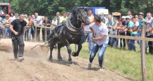У Цветкама код Краљева: Коњи баш све разумеју