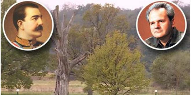 ТАЈНА ТАКОВСКОГ ГРМА: Како је храст прорекао смрт династија Обреновић и Милошевић