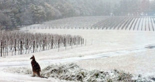 У Аустралији пада снег! 3