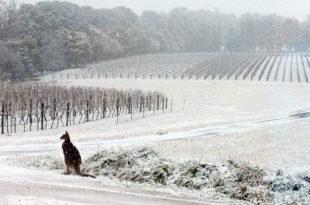 У Аустралији пада снег!