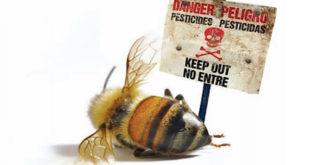 Kо је крив за помор пчела? (видео) 6
