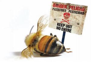 Kо је крив за помор пчела? (видео)