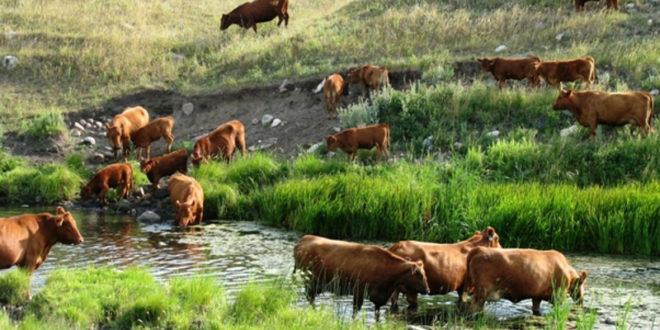 Српско сточарство пред нестајањем