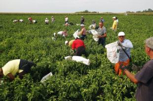 Паори се одричу ораница због катастрофалне аграрне политике коју води Вучићева влада која уз помоћ ММФ-а припрема ликвидацију пољопривреде
