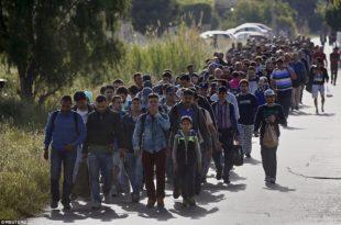 Рекордан броj избеглица прешао мађарско-српску границу