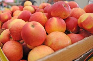 Делта аграр извезао 21.500 тона јабука