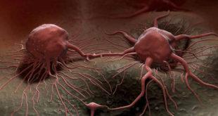 НЕМАЧКИ НОБЕЛОВАЦ: Рак изазива непознати вирус у говедини и крављем млеку 9