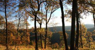 Лепоте Србије: Јесење јутро на Фрушкој гори (фото галерија)