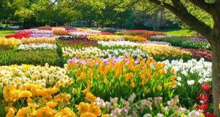 Данас почиње пролеће 9