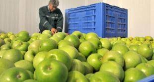 Месо из Србије још под ембаргом Русије, у најави забране за воће