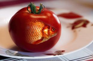 Потврђен први смртни случај проузрокован ГМО храном! 9