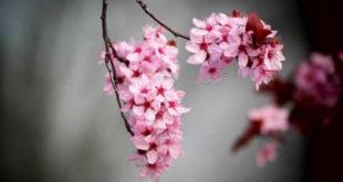 Буђење пролећа у горњомилановачком крају (фото) 9