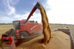 Почела жетва пшенице (видео)