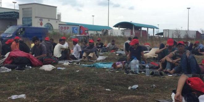 Мигранти масовно траже азил у Србији 1