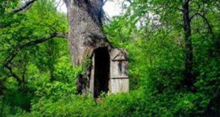 ХИТ НА ДРУШТВЕНИМ МРЕЖАМА Црква у храстовом стаблу у шуми код Владичиног Хана 6
