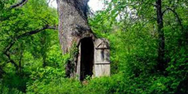 ХИТ НА ДРУШТВЕНИМ МРЕЖАМА Црква у храстовом стаблу у шуми код Владичиног Хана