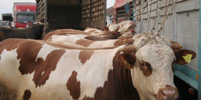 Држава дала 240 милиона евра за сточарство, резултата нема