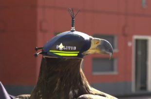 Орлови против дронова (видео) 9