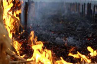 ОРБАН ШОКИРАО ГМО ЛОБИСТЕ: Мађарска спалила 5.000 хектара ГМО кукурузних поља!
