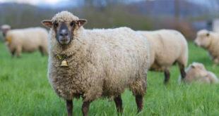 Посланици СНС-а немају појма о чему гласају, већ им се звуком звона као овцама шаље сигнал када треба да гласају за 6