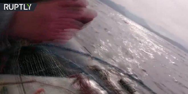 Отишли да пецају а шта су упецали... (видео)