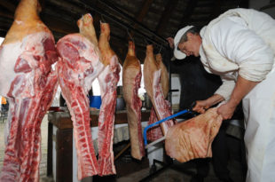 Укидање прелевмана на увоз млека и меса из ЕУ - КАТАСТРОФА за домаће произвођаче