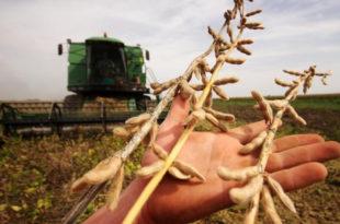 ГМО соју нашли на 10 хектара у Мачви и Срему 6