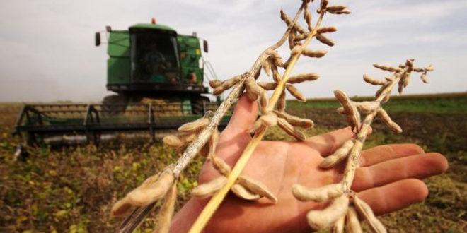 ГМО соју нашли на 10 хектара у Мачви и Срему