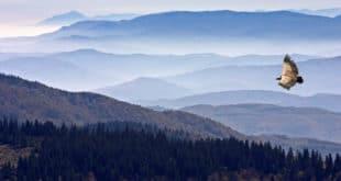 ПРЕКРАЈАЊЕ ИСТОРИЈЕ УСРЕД СРБИЈЕ: Санџак избрисао Рашку област 9
