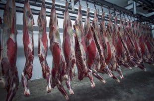 Србија је прошле године произвела само 75.000 тона јунетине, што је најмање за последњих 80 година