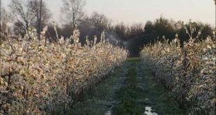 Снег и мраз преполовили род воћарима